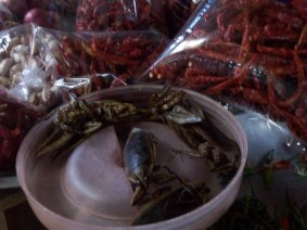 Water beetles for flavoring curries