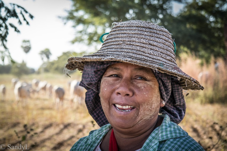 Lady in cow field in Myanmar