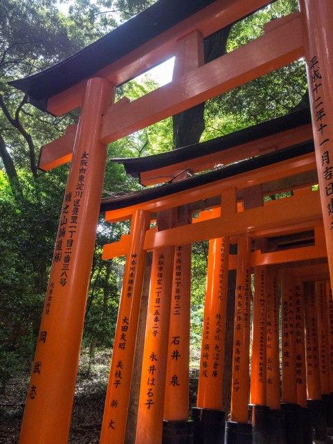 Torii gates at Fushima Inari