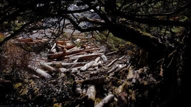 Driftwood ... logs