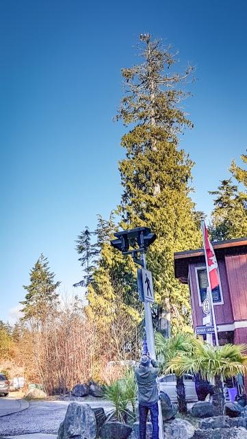 Eagles on Big Tree spotter