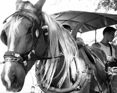 Horse-2150162-2