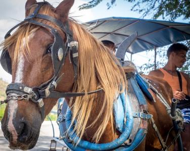 Horse-2150162