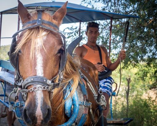 Horse-2150165