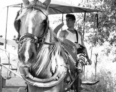 Horse-2150167-2