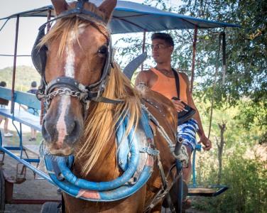 Horse-2150167
